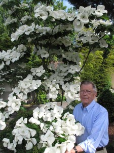 Elwin Orton, a researcher at Rutgers University, was responsible for breeding and introducing new native dogwoods that could better withstand attacks from insects and pathogens.