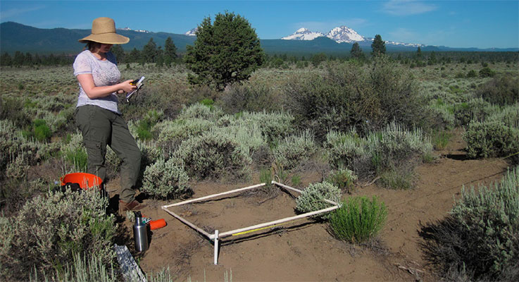 A researcher takes GIS data of the locations and populations of individual A. peckii plants in the sagebrush-juniper woodlands of Bull Flat beneath the Three Sisters.
