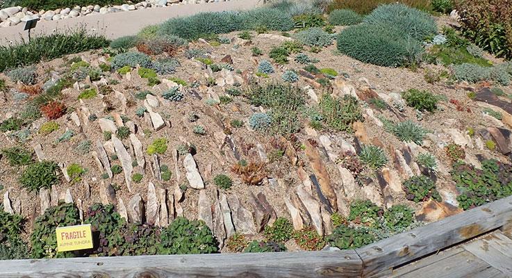 Designed By Curator Mike Kintgen, U201cRoots U0027n Rocksu201d Is The Featured Crevice