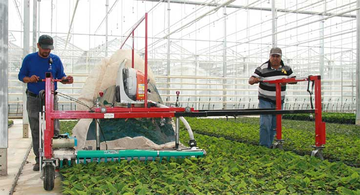 Communicating clear directions is critical in the nursery environment. Here, workers at Smith Gardens in Aurora, Oregon, use an over-the-ground trimmer to prune a crop of poinsettia plants. Photo by Peter Szymczak