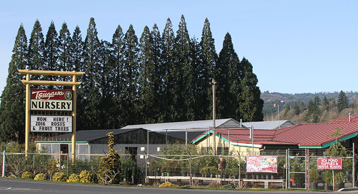 An estimated 100,000 freeway drivers pass Tsugawa Nursery daily as they travel through Woodland, Washington, but it's the quality of their offerings that  has made the retailer  a regional landmark.  Photo by Curt Kipp