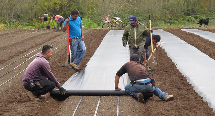 Workers at Northwoods Nursery apply a 1-mil. plastic sheet over a raised bed.  These beds are used for seed and cutting propagation. By adding them, Northwoods was able to grow its seedlings 1.7 times more efficiently. Photo by Jim Gilbert