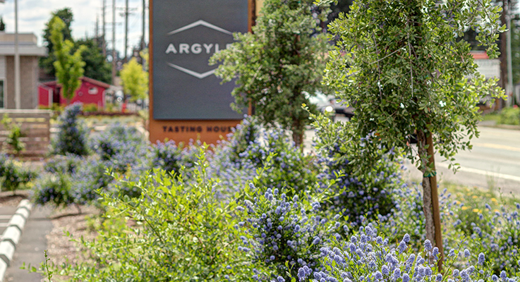 Sean Hogan of Cistus Design Nursery recently re-landscaped the grounds at Argyle Winery in Dundee, Oregon, with drought-tolerant plants that require little maintenance and water, such as Quercus, Ceanothus and Arctostaphylos. Photo by Greg Kozawa