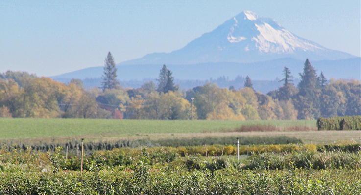 Mount Hood Oregon S Highest Peak Creates A Dramatic Backdrop For Highland Meadow Nursery Co In Molalla Photo By Curt Kipp