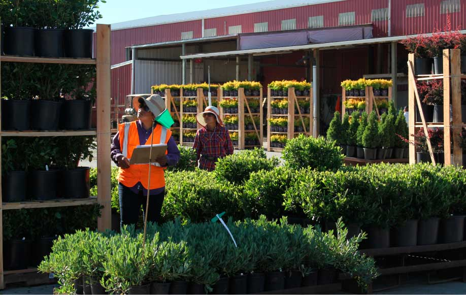Workers at Bailey Nurseries
