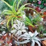 A houseplant awakening