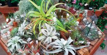 Houseplants Display