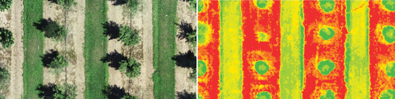 (Left) Aerial view of trees on a nursery as seen with the naked eye. (Right) Colorimetric renderings look at plant health from a different lens.