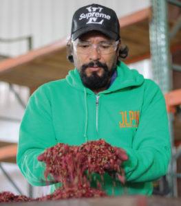 Raphael Calderon of JLPN removes samara wings from a batch of seeds.