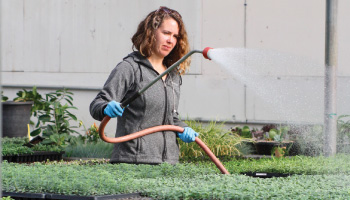 Melissa Giancola of Peoria Gardens waters plants.