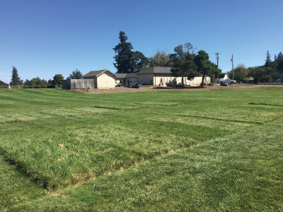 Various mowing heights (2 and 4 inches) and frequencies (1x, 2x, 4x per month) at Oregon State University, August 2018. Photo courtesy of Oregon State University.