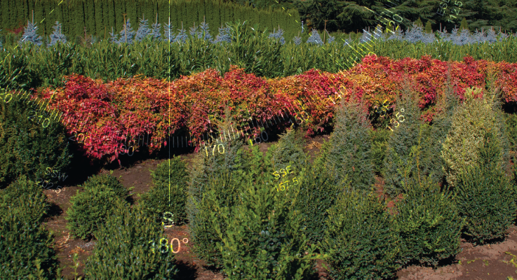 Plants West Inc. provides an assortment of conifers topiaries, shrubs and deciduous plants. Photo by Curt Kipp