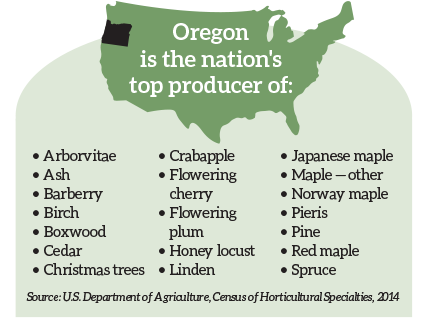 Oregon is the nation's top producer of: Oregon is the nation's top producer of the following trees and shrubs, which can be found on • Arborvitae • Ash • Barberry • Birch • Boxwood • Cedar • Christmas trees • Crabapple • Flowering cherry • Flowering plum • Honey locust • Linden • Japanese maple • Maple — other • Norway maple • Pieris • Pine • Red maple • Spruce Source: U.S. Department of Agriculture, Census of Horticultural Specialties, 2014