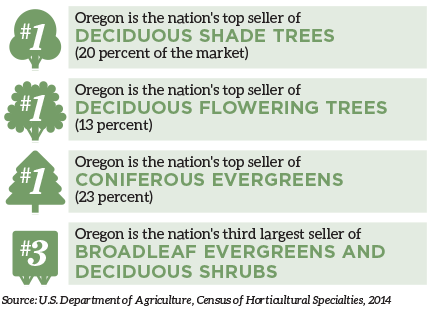 Oregon is the nation's top seller of deciduous shade trees (20 percent of the market) Oregon is the nation's top seller of deciduous flowering trees (13 percent) Oregon is the nation's top seller of coniferous evergreens (23 percent) Oregon is the nation's third largest seller of broadleaf evergreens and deciduous shrubs