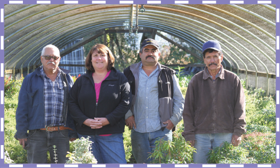 Owner and founder Alicia Cruz-Bernstein (second from left) keeps a small crew busy at Plants West Inc., covering several office functions while moving self-grown as well as brokered material out to customers. Pictured with her are (from left) Antonio Valenzuela, Martin Santos, and Jose Valenzuela.