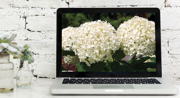 Shopping for plants online