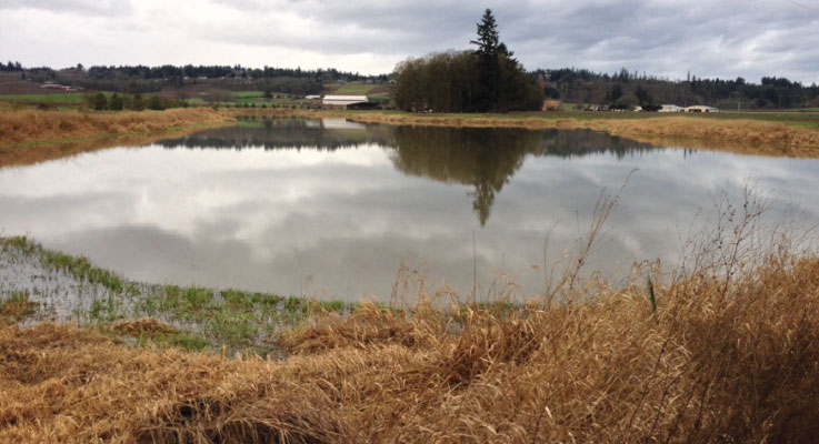 Surface water sources are often used for irrigating plants. Photo courtesy of Oregon State University