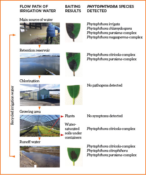 Fig. 5: Chlorination of irrigation water reduces Phytophthora contamination. Photo courtesy of Oregon State University