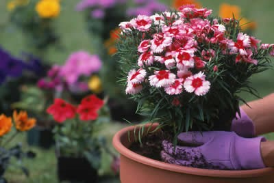 Plants make life better
