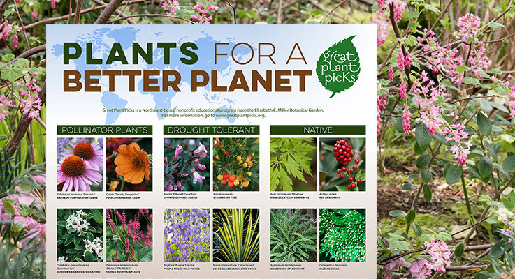 Plants for a better planet