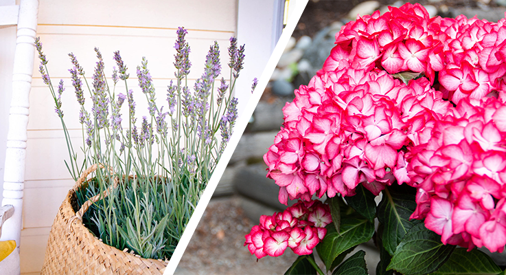 Two stand out at New Varieties Showcase